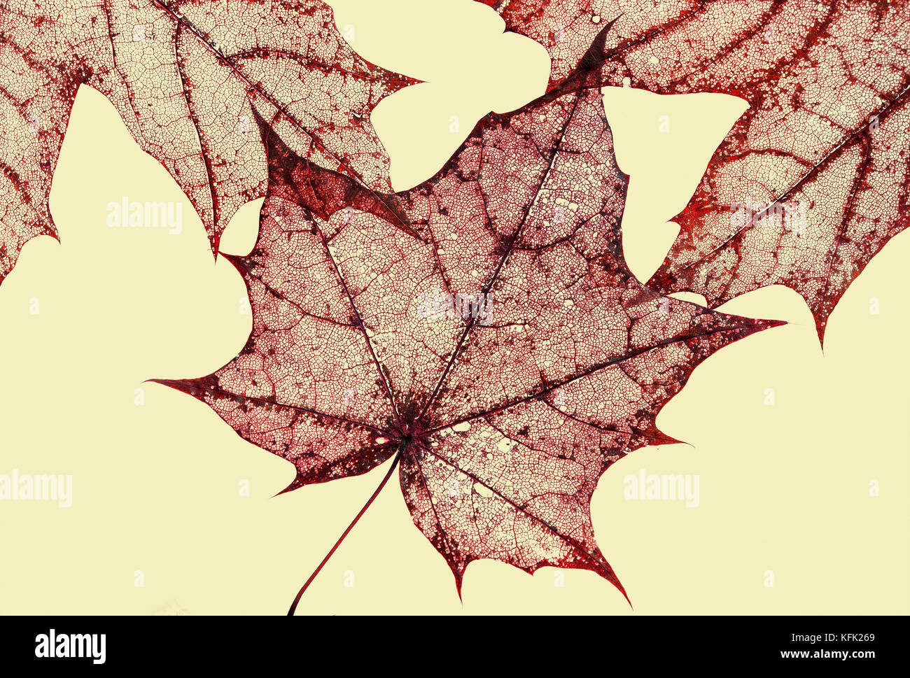 Carved maple leaf stock photos