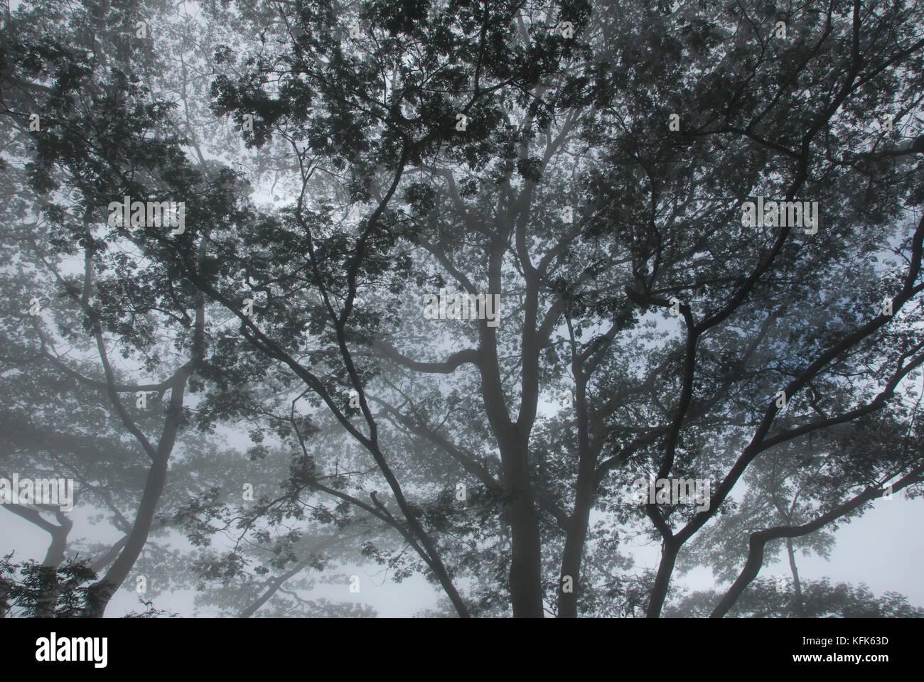 Rainforest, in the mountains southwest of Dili, Timor-Leste (East Timor) Stock Photo