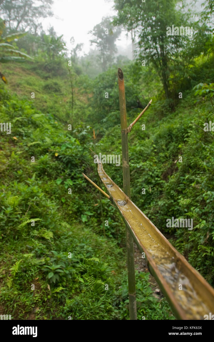 An aqueduct made of bamboo carries water from a small creek to a jug for local residents to collect.  Rainforest Stock Photo