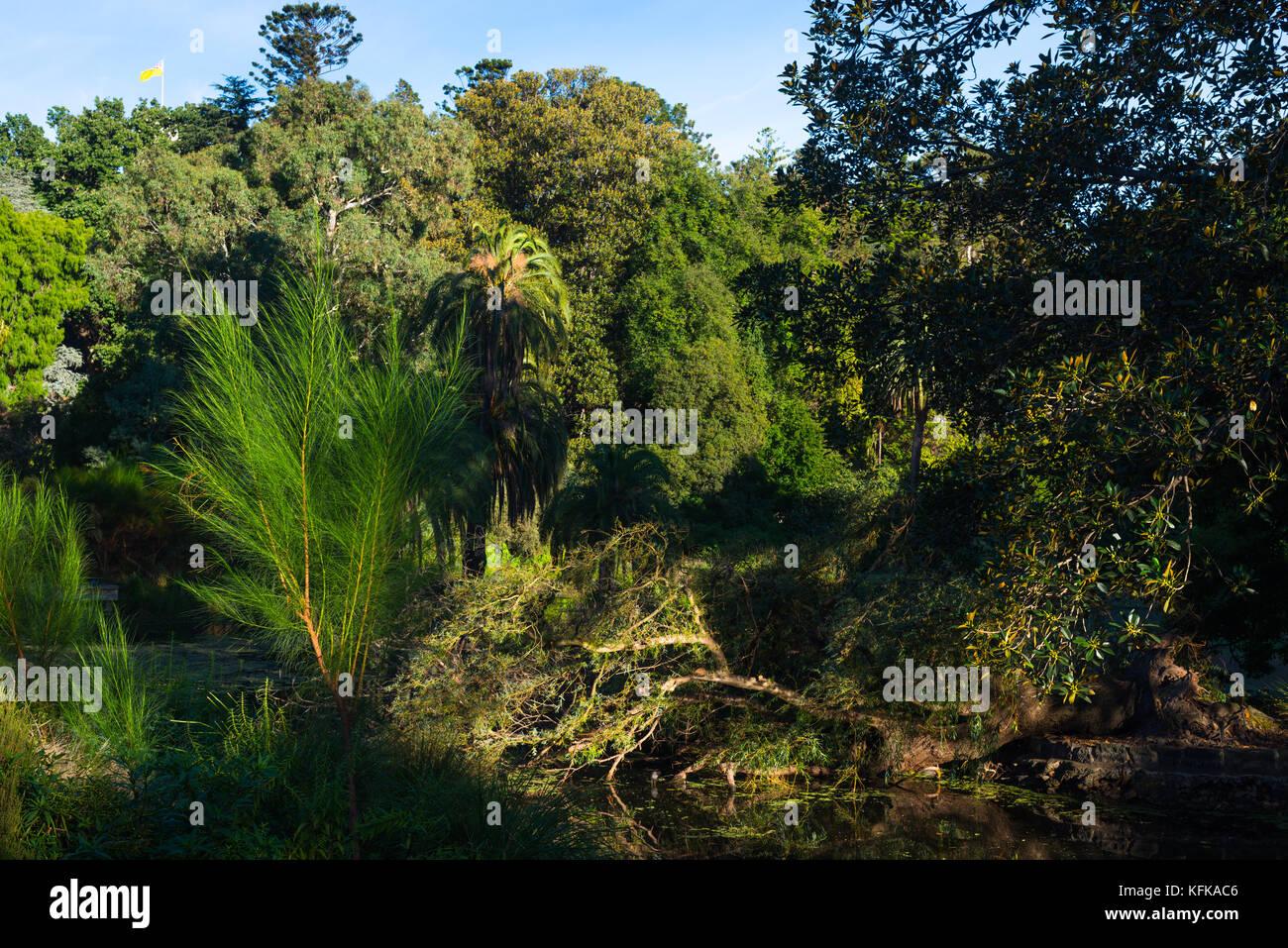 The Royal botanic gardens, Melbourne, Australia - Stock Image