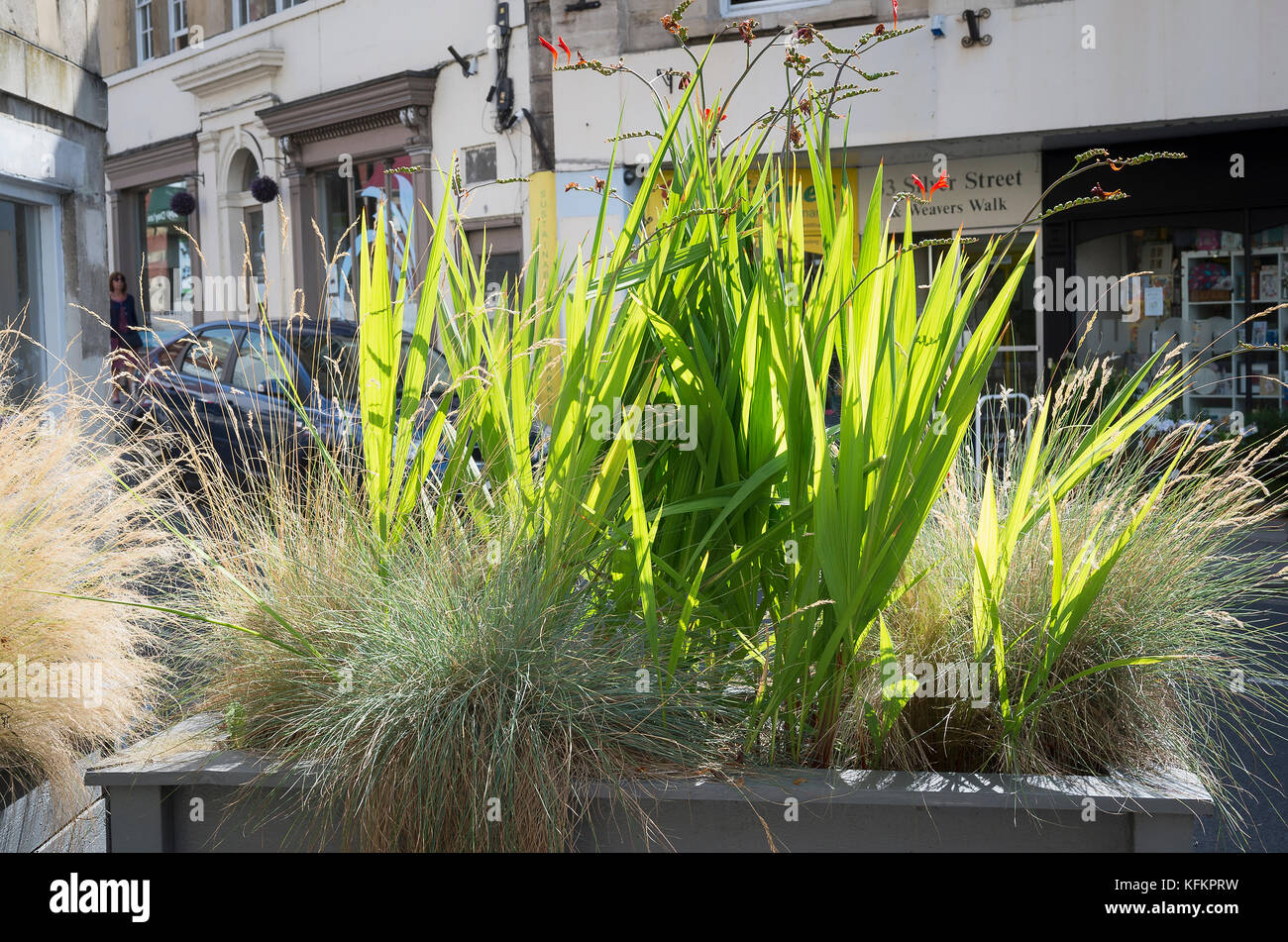 Ornamental grasses and crocosmia provide an attractive natural screen from the road in Bradford on Avon Wiltshire - Stock Image