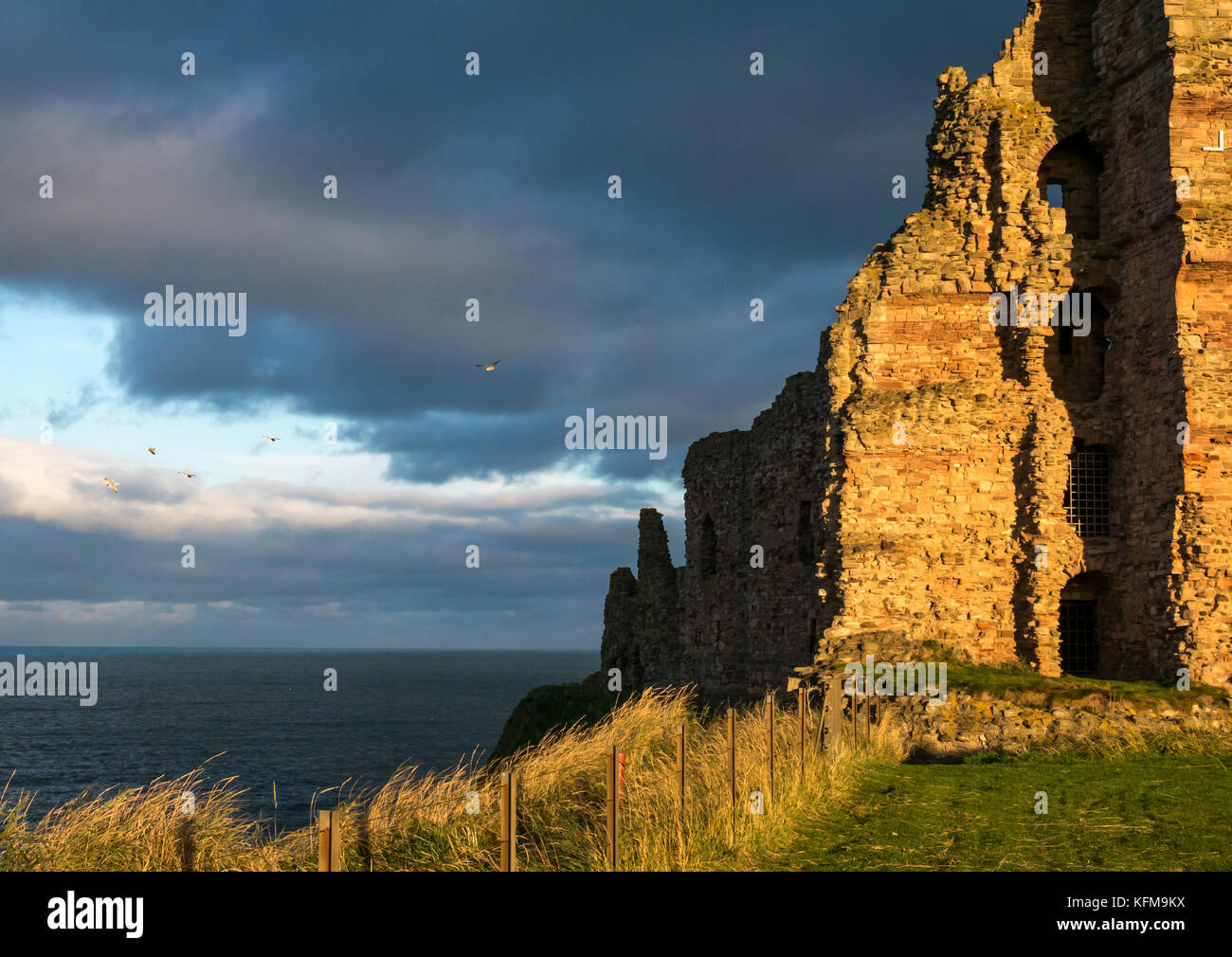 East Lothian, Scotland, UK. Warm low dusk sunlight on curtain wall of 14th century ruined Tantallon Castle, cliff - Stock Image