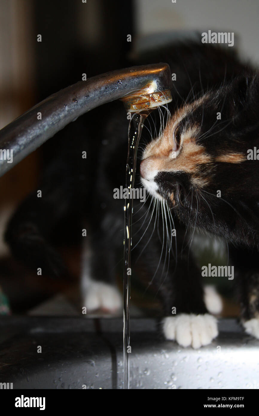 Cat Drinking From The Tap Stock Photos & Cat Drinking From The Tap ...