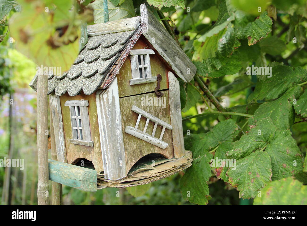 A bug hotel handing in a fruit bush on an English allotment garden in summer ,UK - Stock Image
