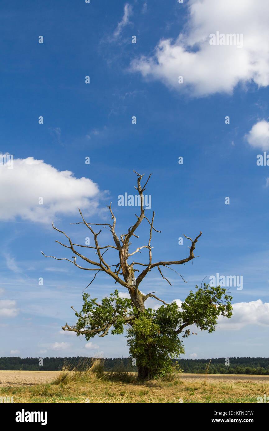 einzelner Baum gegen blauen Himmel - Stock Image