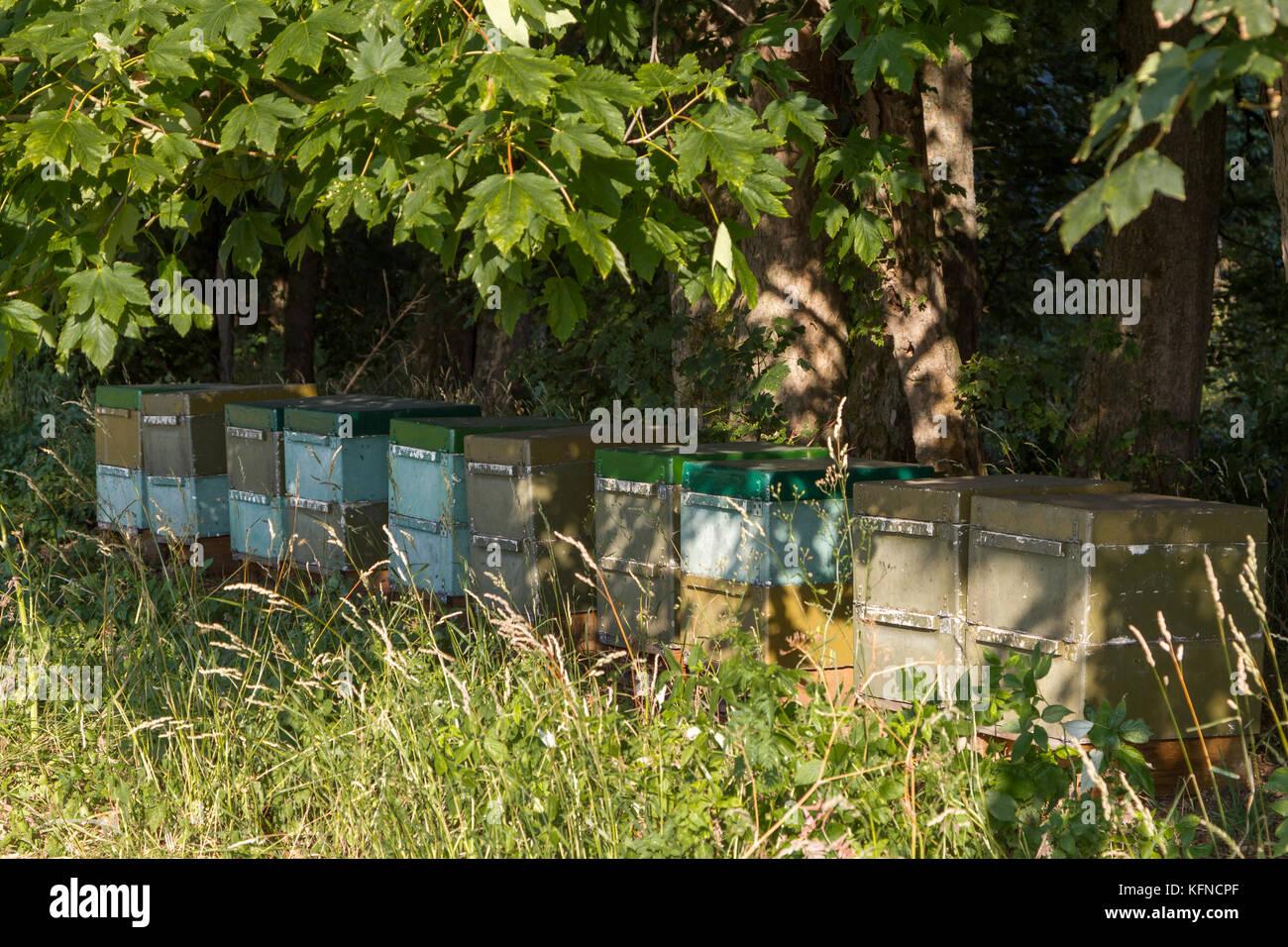 Bienenstock am Waldrand - Stock Image