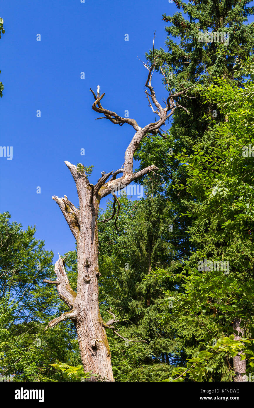 abgestorbener Baum - Stock Image