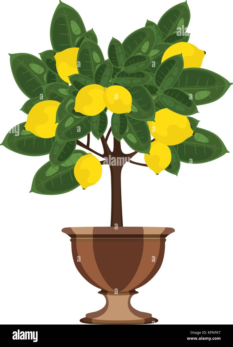Lemon tree in a flowerpot vector illustration - Stock Vector