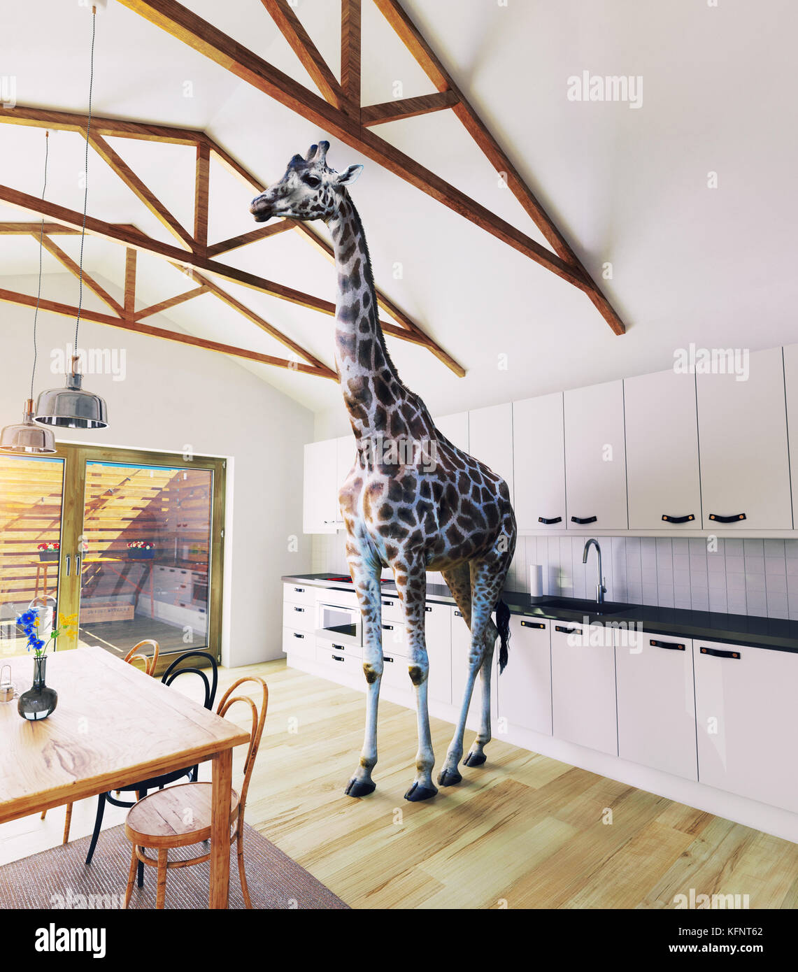 Giraffe in the attic window. 3d rendering elements and photo mixed concept. - Stock Image