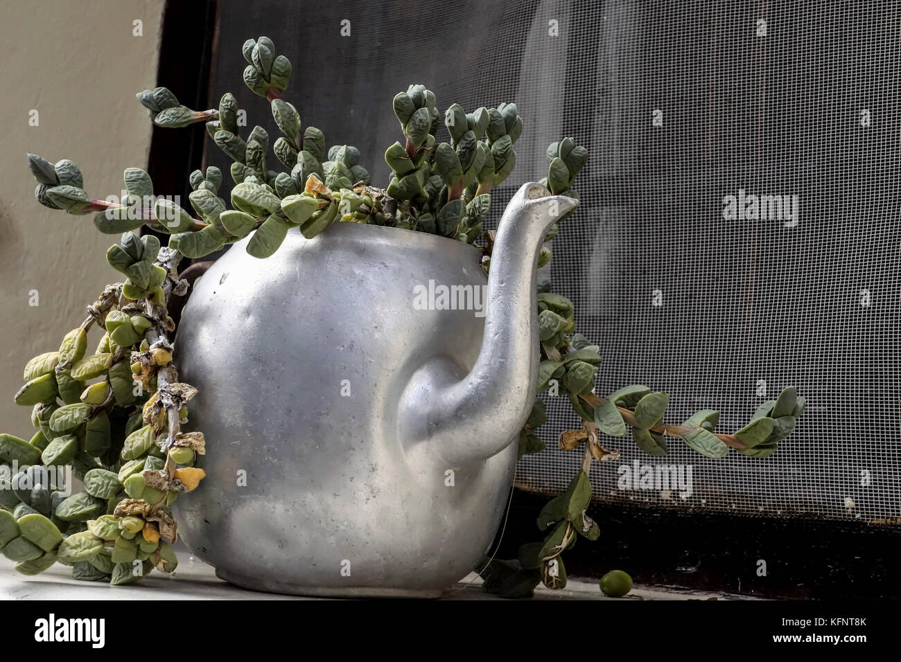 Old Teapot used as a Plant Pot - Stock Image