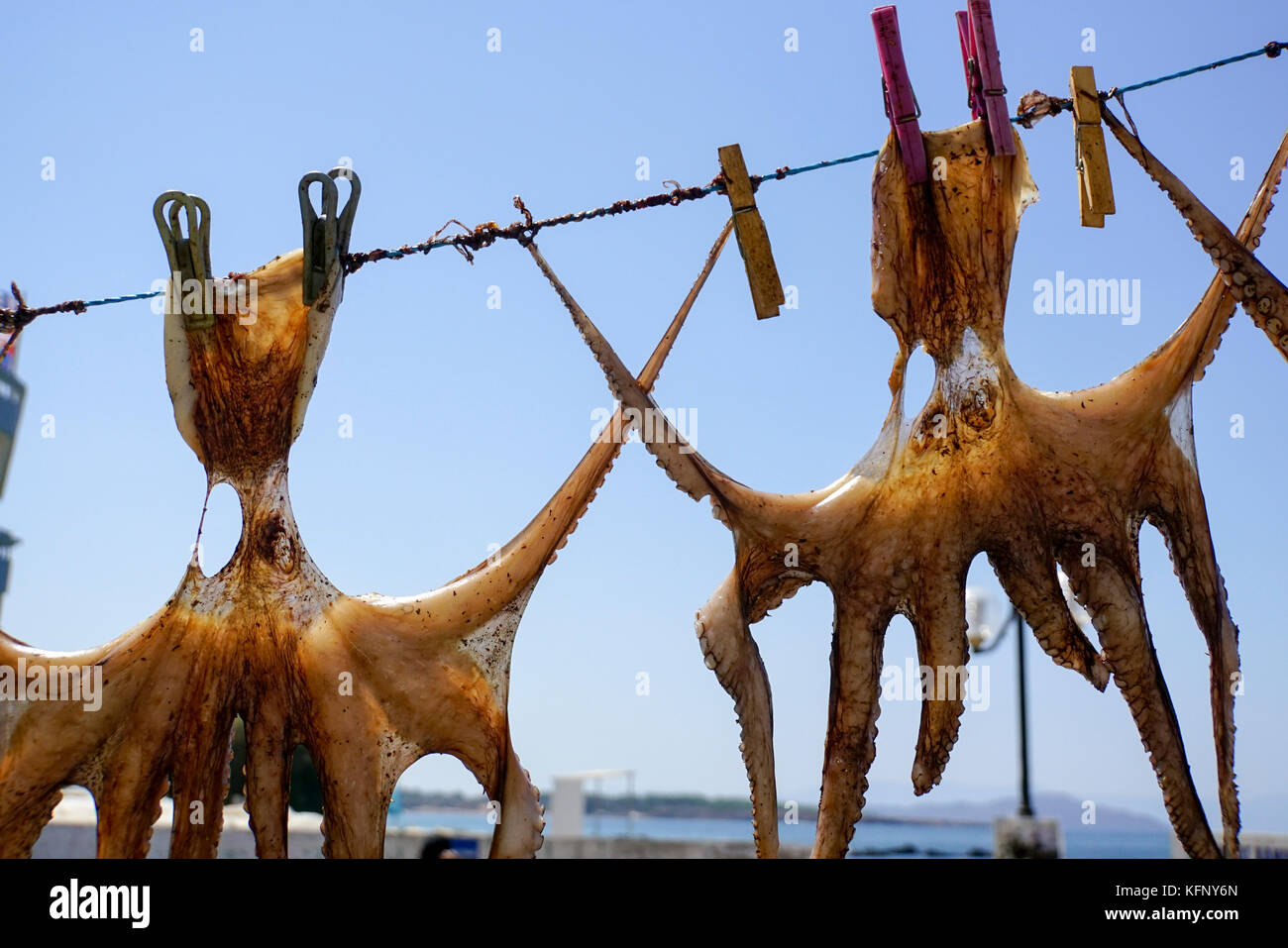 Octopus drying in the sun on a line. Photographed in Chania, Crete, Greece - Stock Image