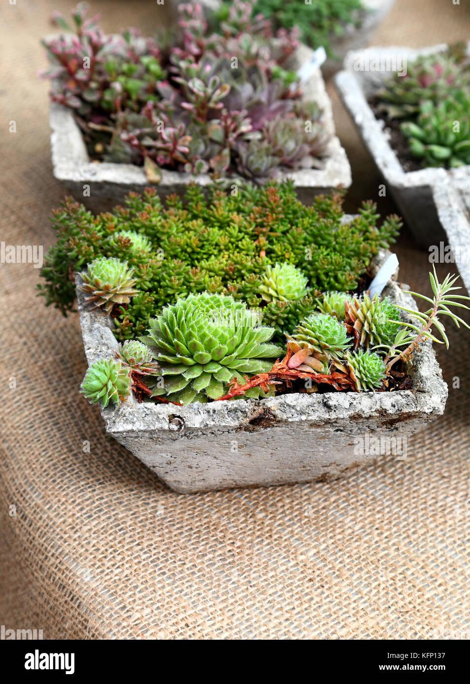 Beautiful Mini Cactus Garden Arrangements   Stock Image