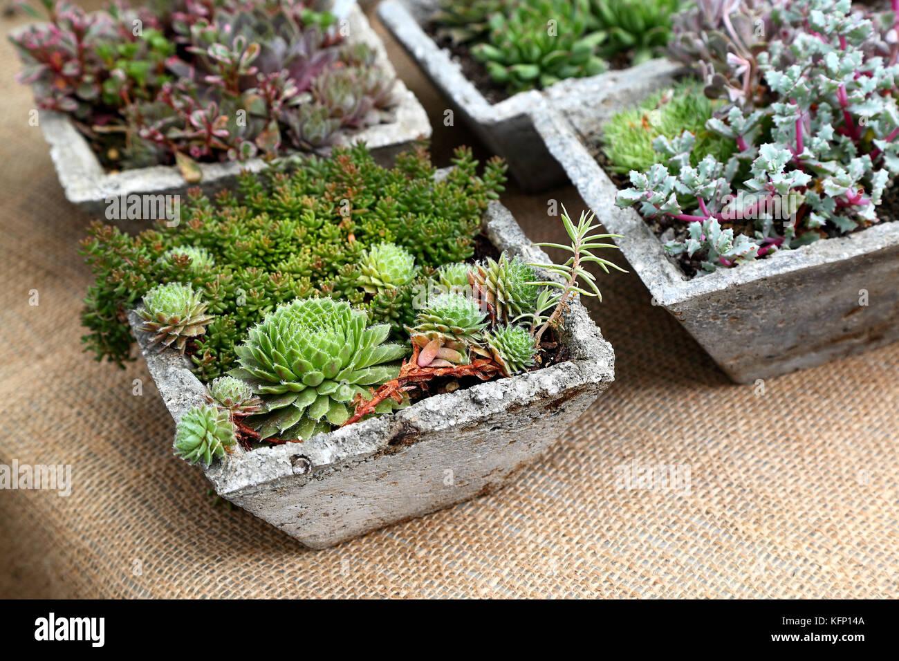 Mini Cactus Garden Arrangements