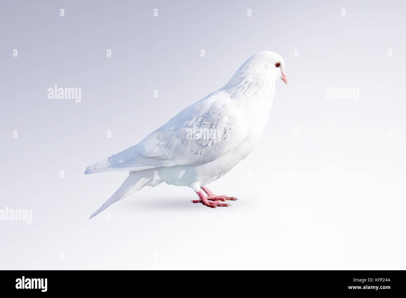 Religious Dove Stock Photos Amp Religious Dove Stock Images