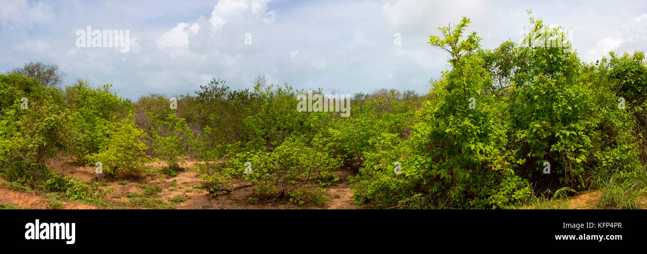 Tropical landscape at Coconut Wells north of Broome , North Western Australia, on a cloudy afternoon in the Summer - Stock Image