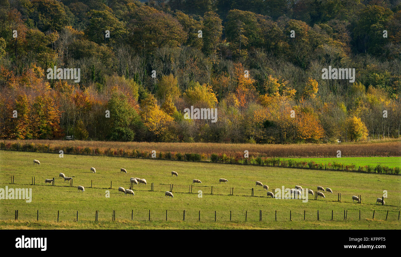Gogmagog Hills, Cambridgeshire, UK. 31st Oct, 2017. Autumn colours on the Gogmagog Hills south of Cambridge, Cambridgeshire,England, - Stock Image
