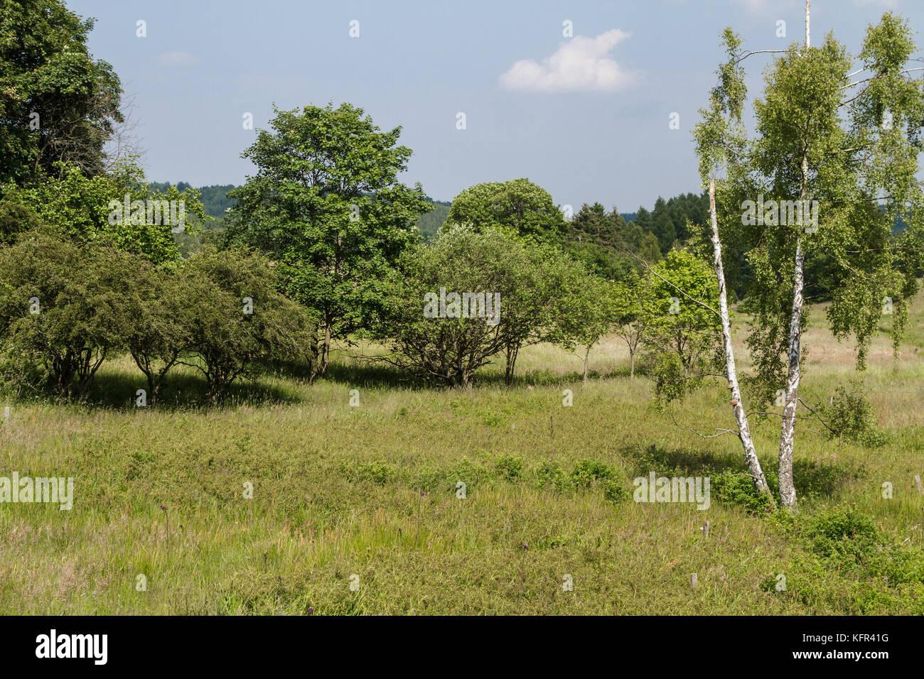 Naturlandschaft Wiese - Stock Image