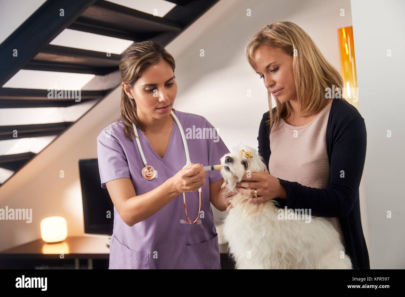 Vet And Dog Owner Giving Medicine Drug To Dog - Stock Image