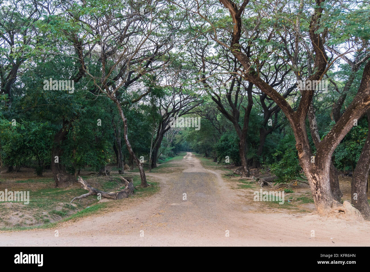 Empty road into the wood at angkor wat siem reap cambodia - Stock Image