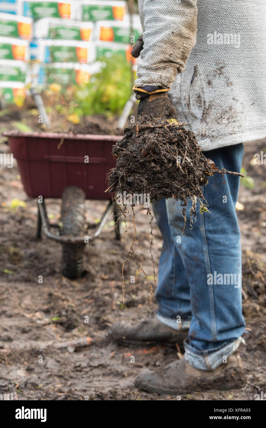 Dirty Wood Chips ~ Mud wet dirty filthy stock photos