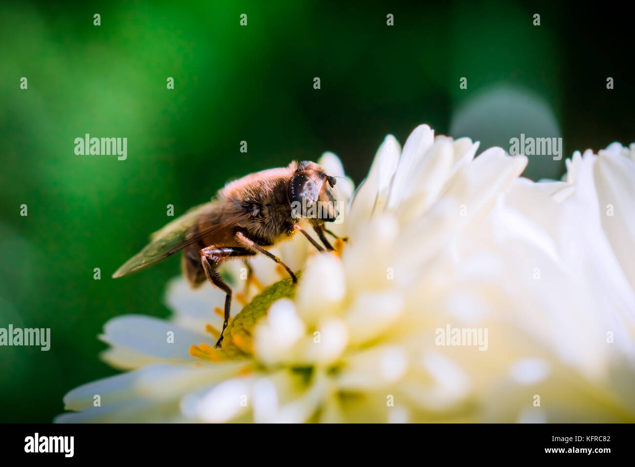 Bee Diaries - Stock Image