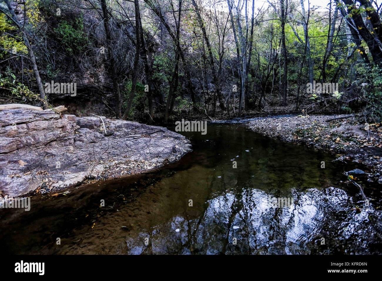 Canadian Beaver Dams Ecosystem in the Cuenca los Ojos in Agua Prieta, Sonora,  Mexico.  Castor nada en dique. - Stock Image