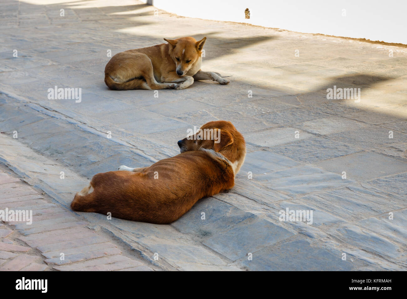 two red dogs lie on a stone tile - Stock Image