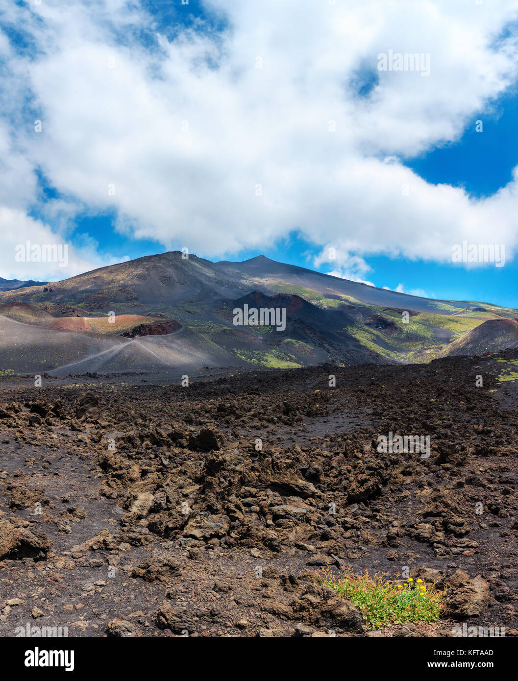 Flowers on stony magma fields between summer Etna volcano mountain craters, Sicily, Italy. - Stock Image