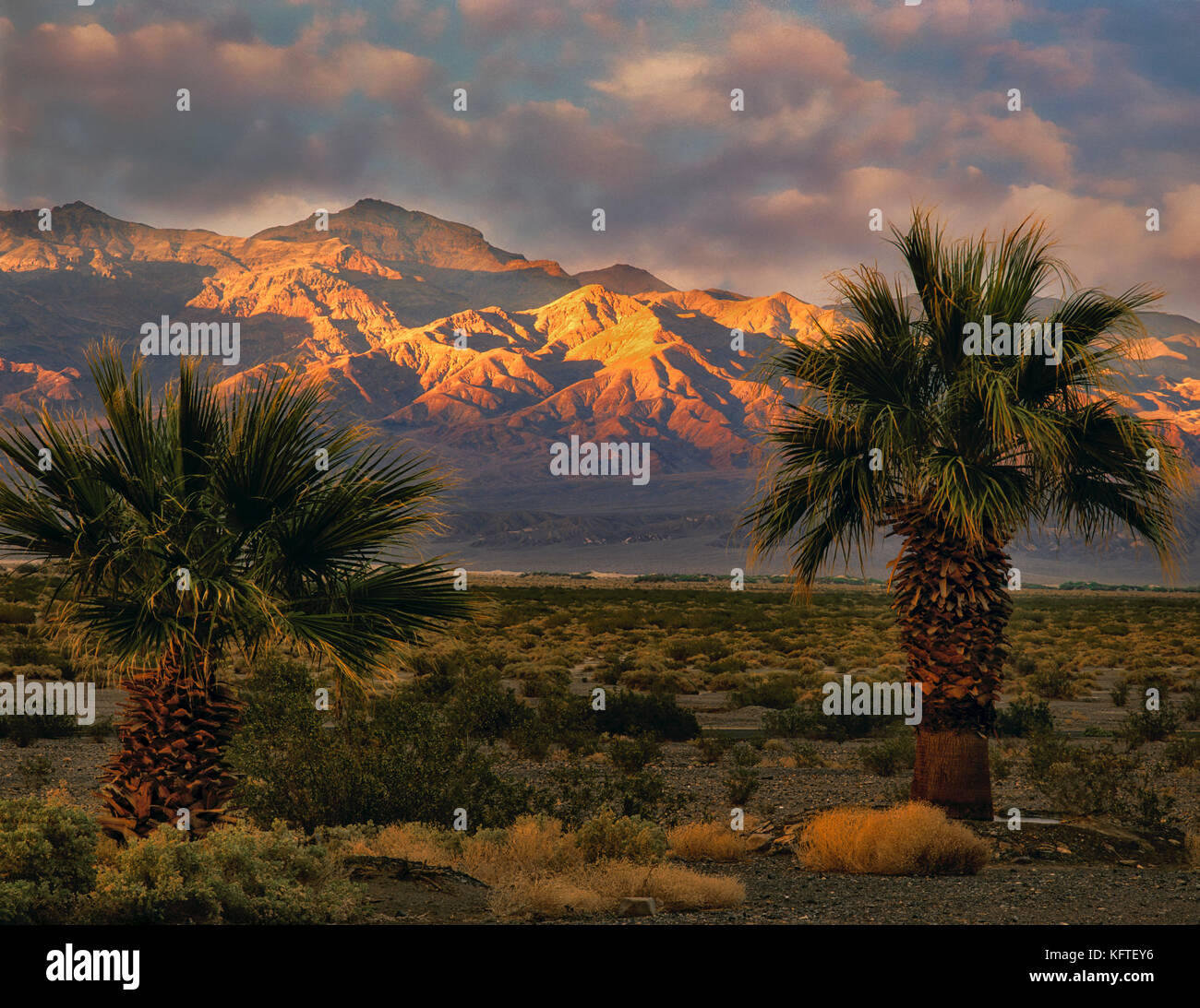Sunset with palm trees and funeral Mountains. Death Valley National Park, California - Stock Image
