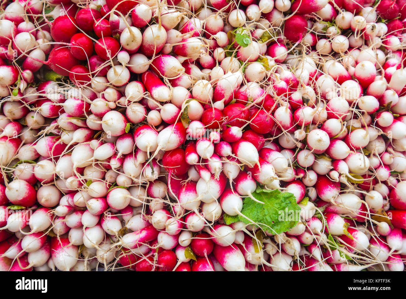 Bunches of radishes on market stall - France. - Stock Image