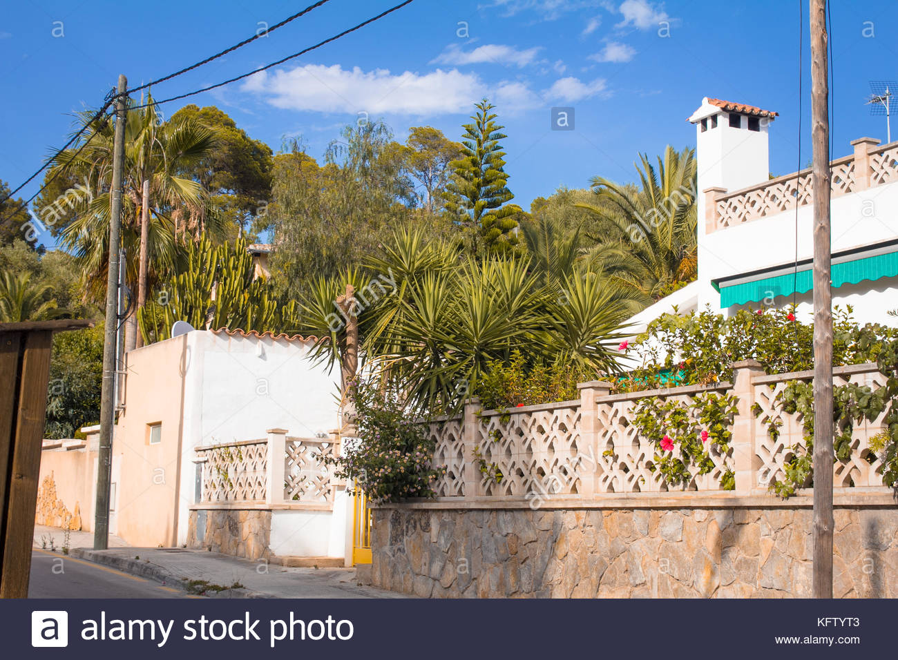 Fence Palm Stock Photos Amp Fence Palm Stock Images Alamy
