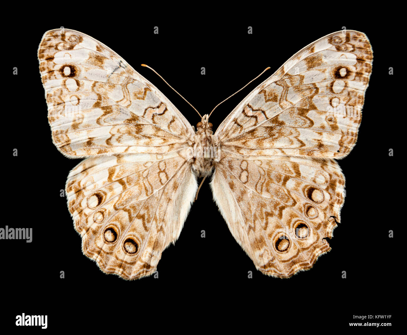 Vintage butterfly isolated on black background Stock Photo
