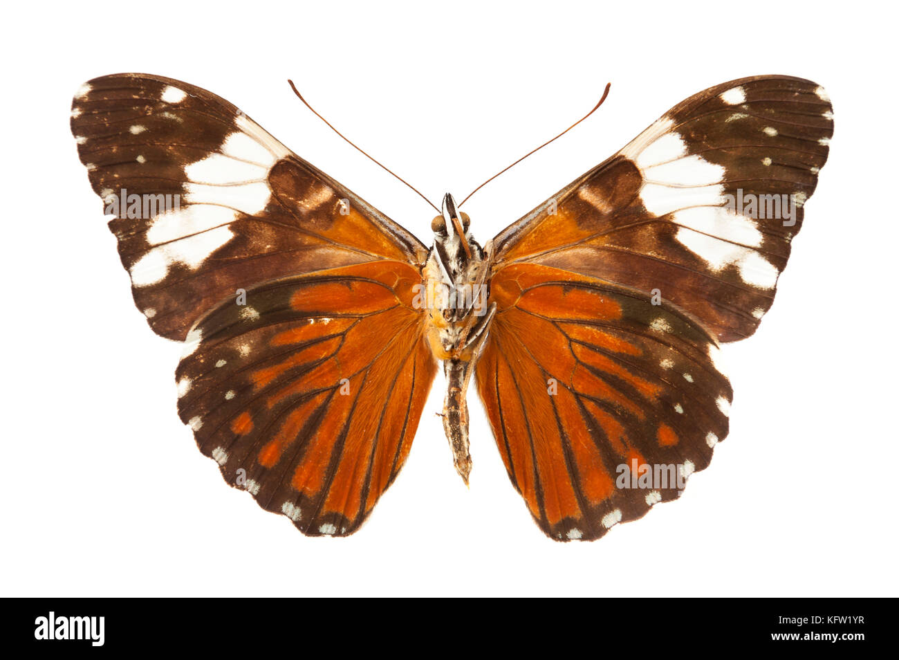 Vintage butterfly isolated on white background Stock Photo