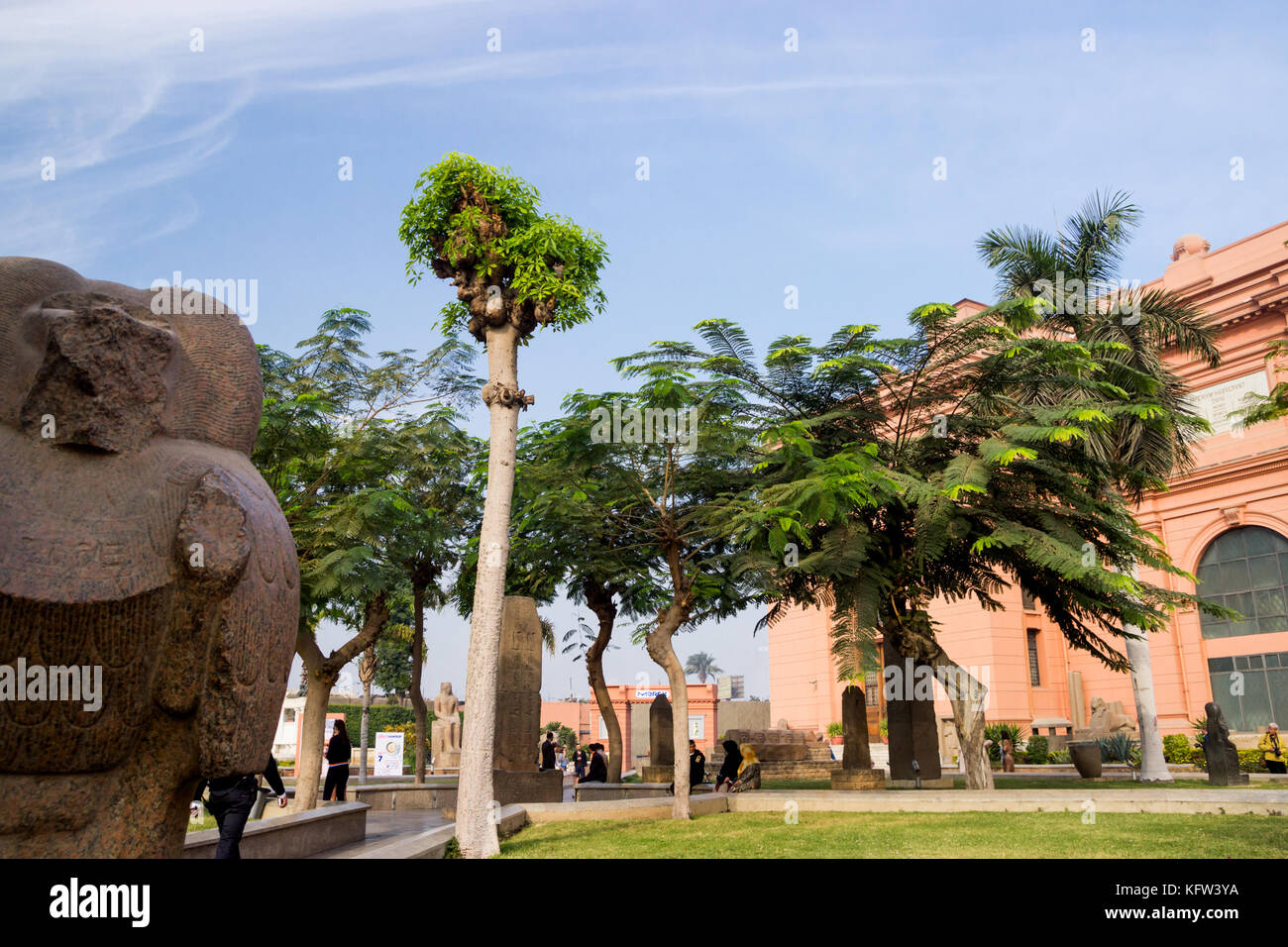 Palms on background in Cairo, Egypt - Stock Image