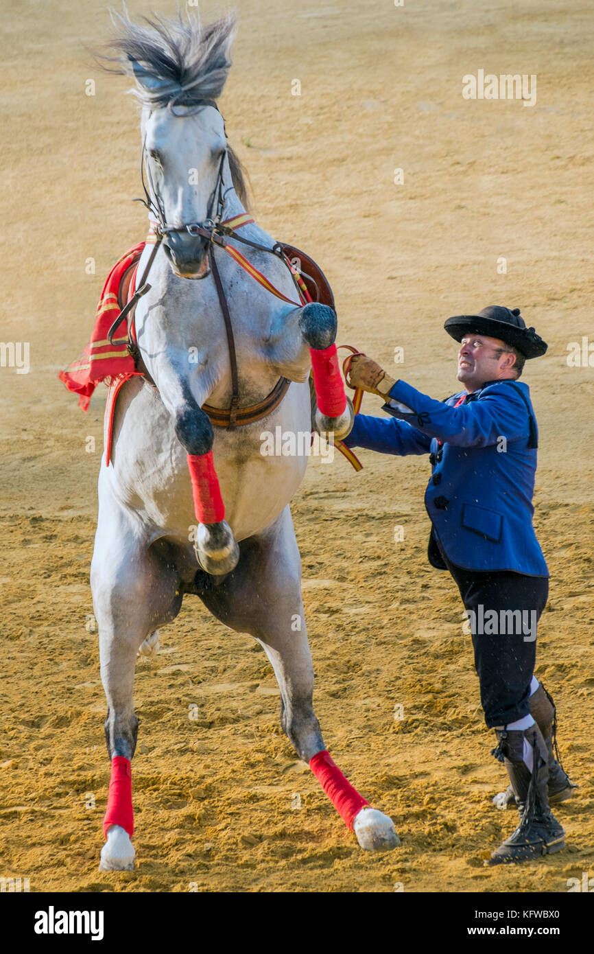 Andalusian Horse show - Stock Image