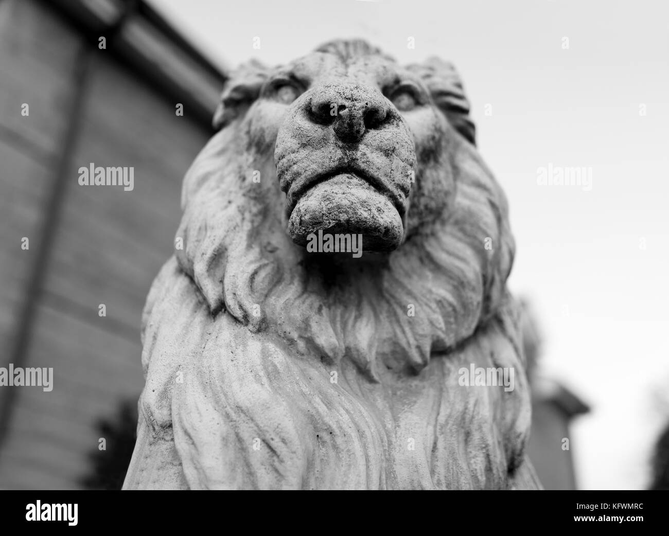 Portrait of a noble and regal male lion stone statue in a stately home garden in England, UK - Stock Image