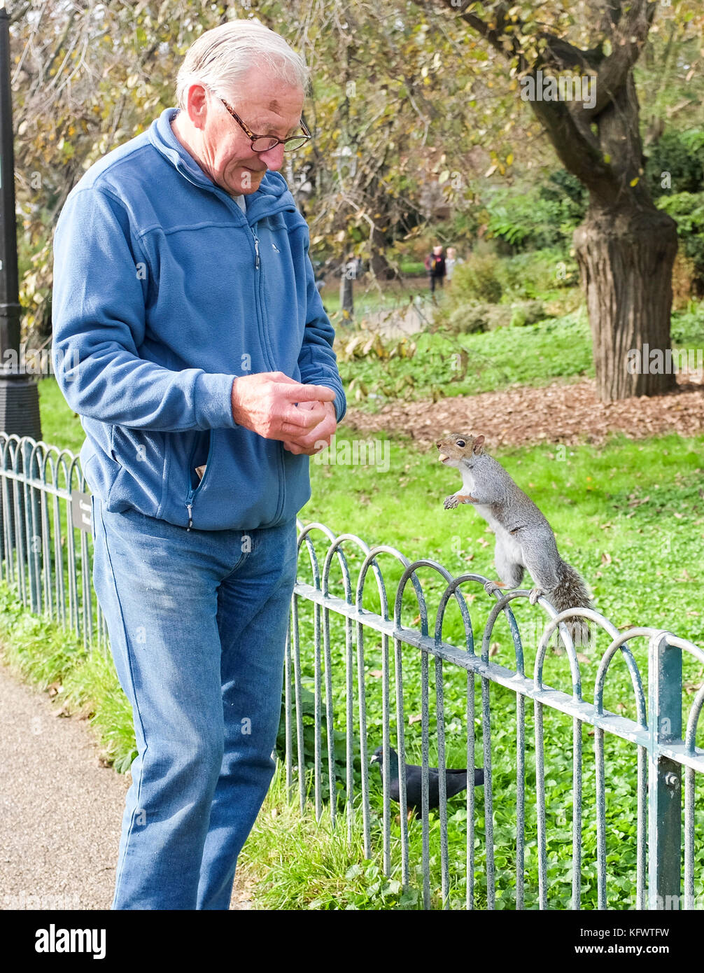 Brighton, UK. 1st November, 2017. A cheeky grey squirrel enjoys a free hand fed meal in Pavilion Gardens Brighton - Stock Image