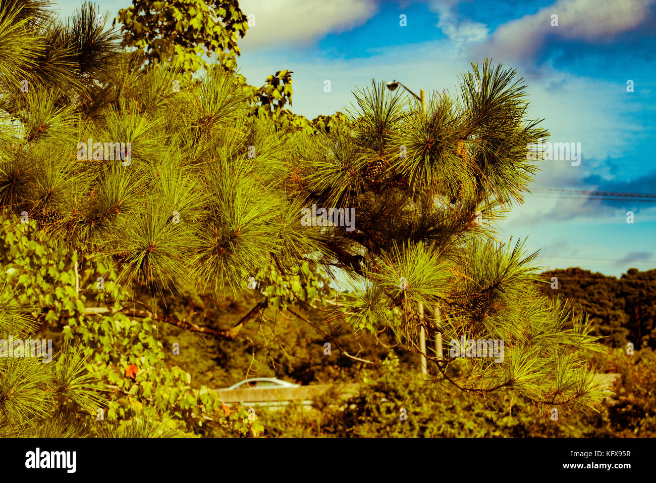 Blue skies, green trees - Stock Image