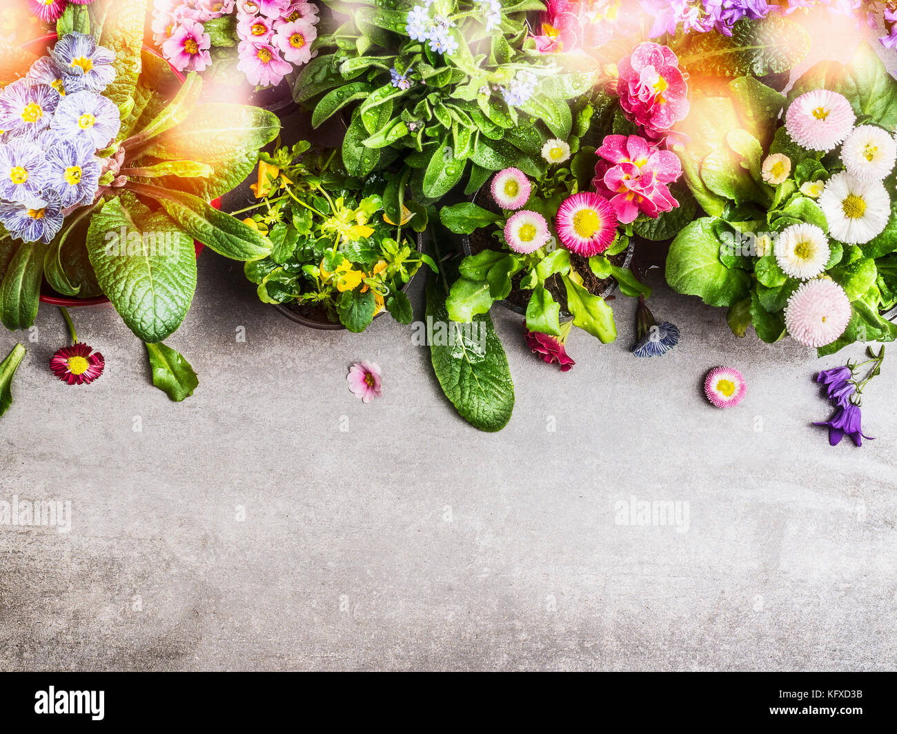 Various colorful spring or summer garden flowers with
