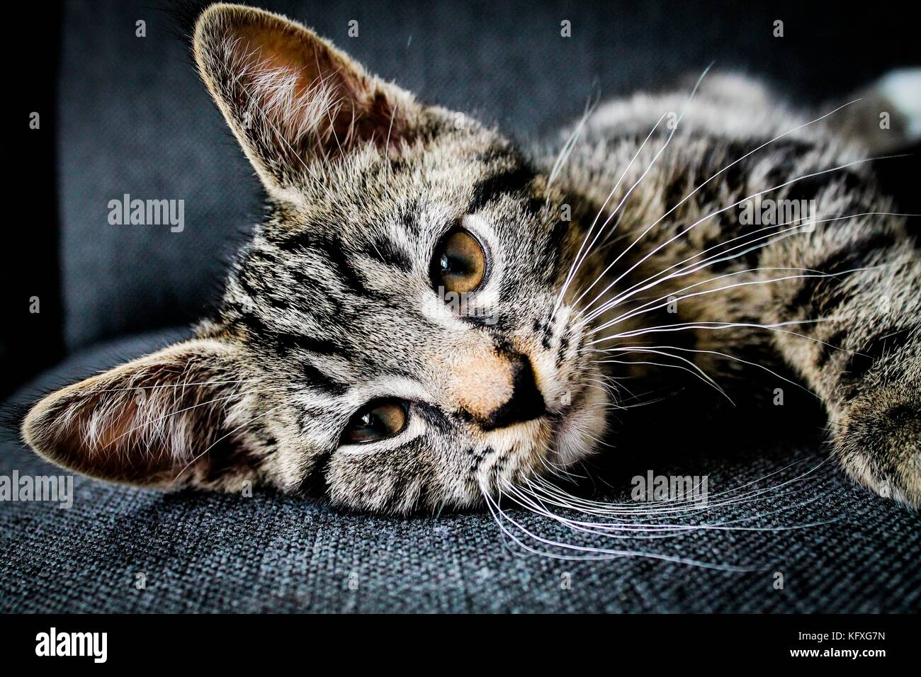 Tabby cat laying down - Stock Image