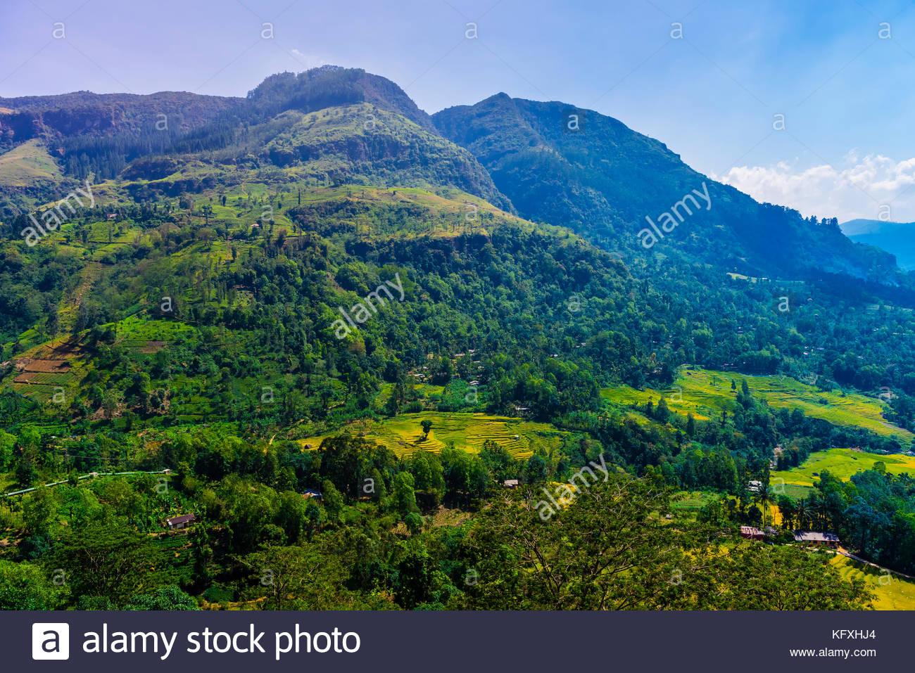 Rice terraces and tea gardens, Ramboda, Central Province, Sri Lanka. - Stock Image
