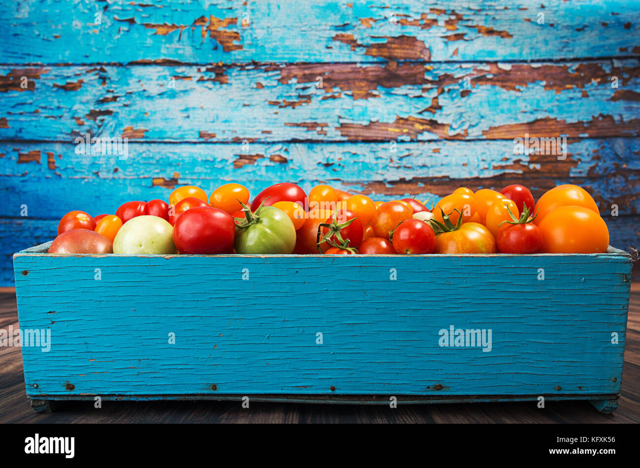 Various different color organic homegrown tomatoes in blue box against old blue wooden background. Red, yellow, Stock Photo