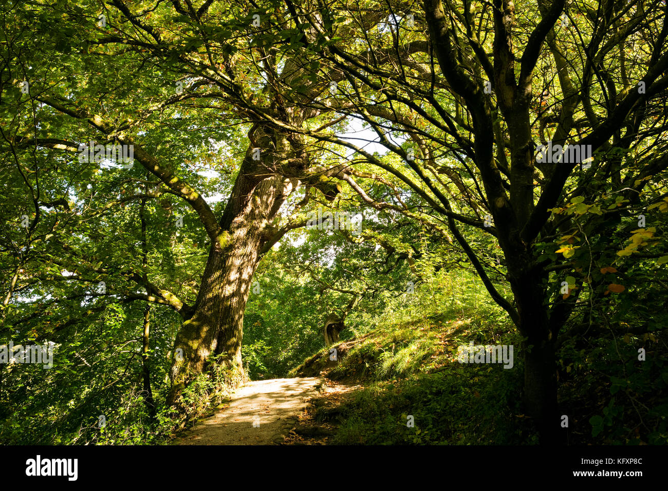 Dappled light on a path through woodland on the Bolton Abbey Estate, Yorkshire Dales National Park, UK - Stock Image