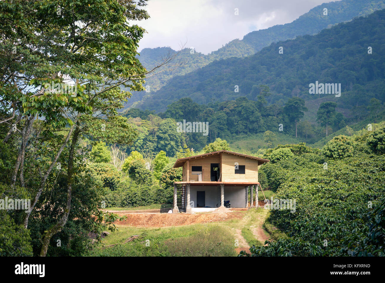 Beautiful landscape of coffee plantations with the Santa Barbara mountains in the background. Honduras, Central Stock Photo