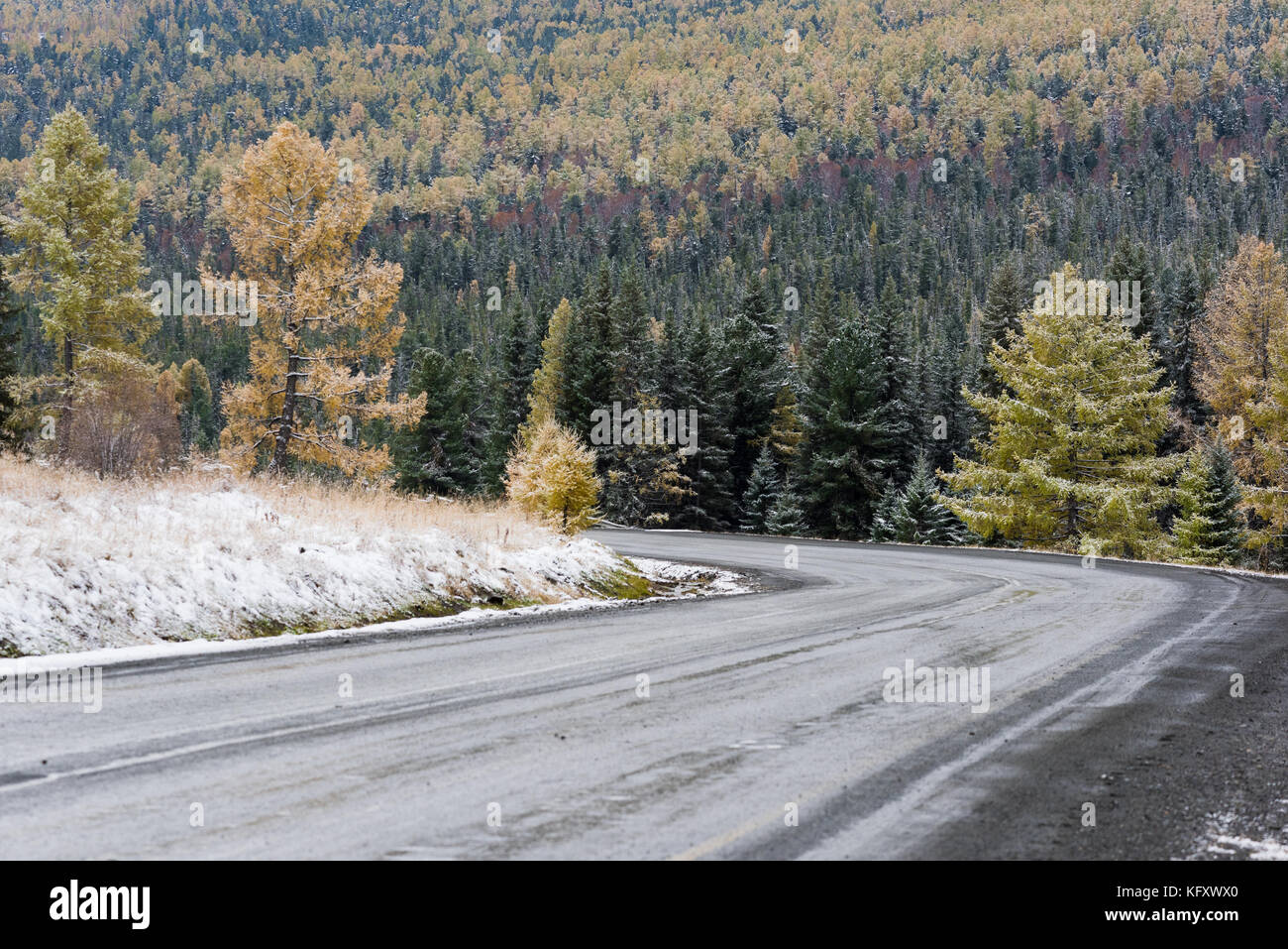 Federal highway M-52 Chuysky tract, asphalted road with markings among the autumn trees covered with snow. - Stock Image