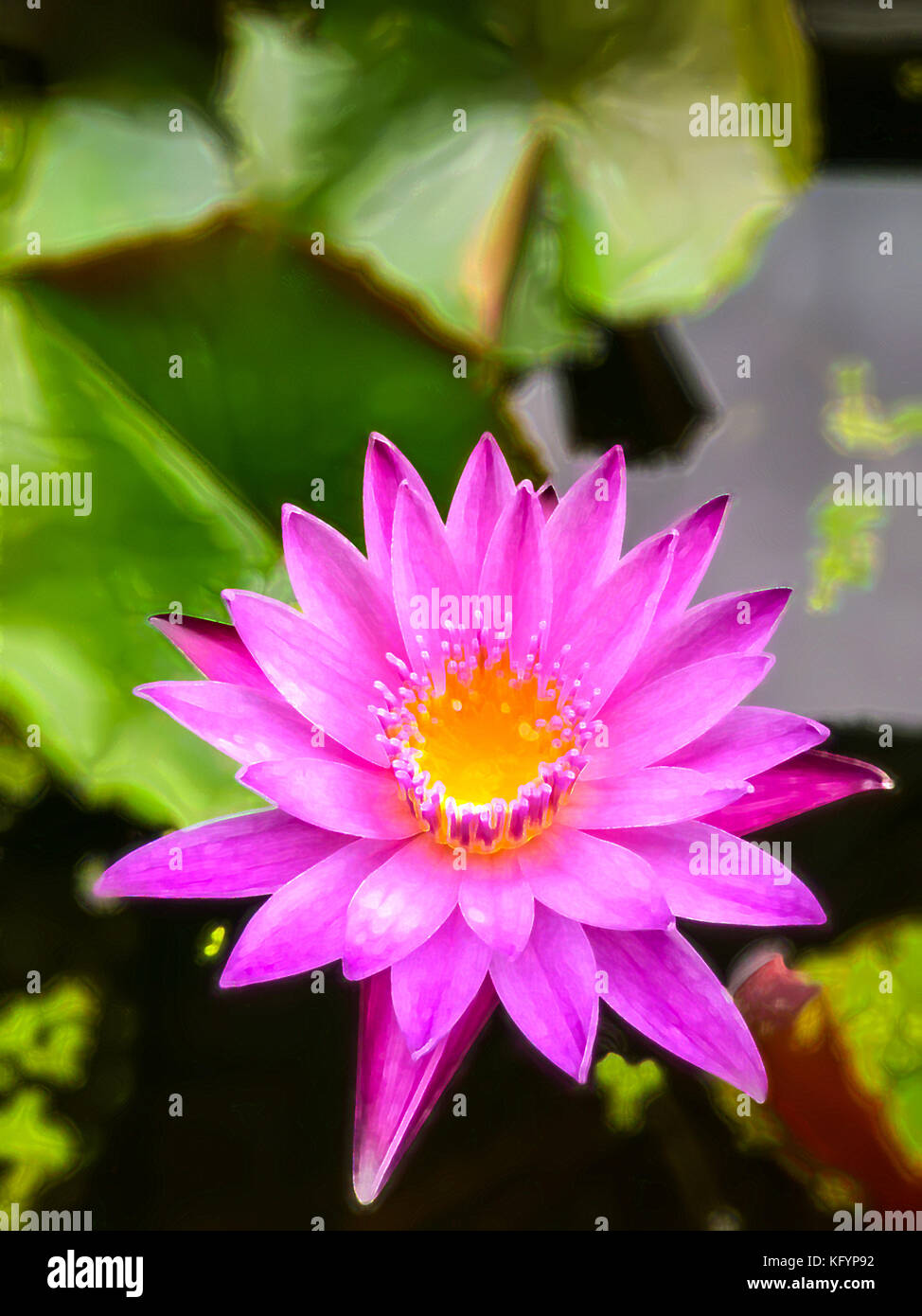 Paint program stock photos paint program stock images alamy a photo of pink lotus process with color paint filter in adobe photoshop program stock izmirmasajfo