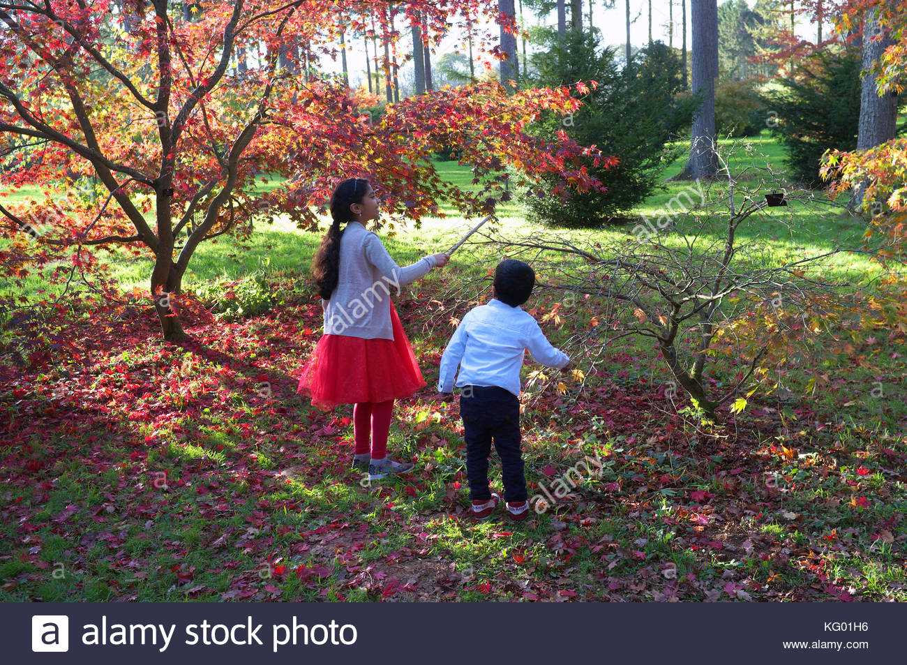 Children play and look at nature in The National Aboretum in Westonbirt in Gloucestershire, UK. - Stock Image