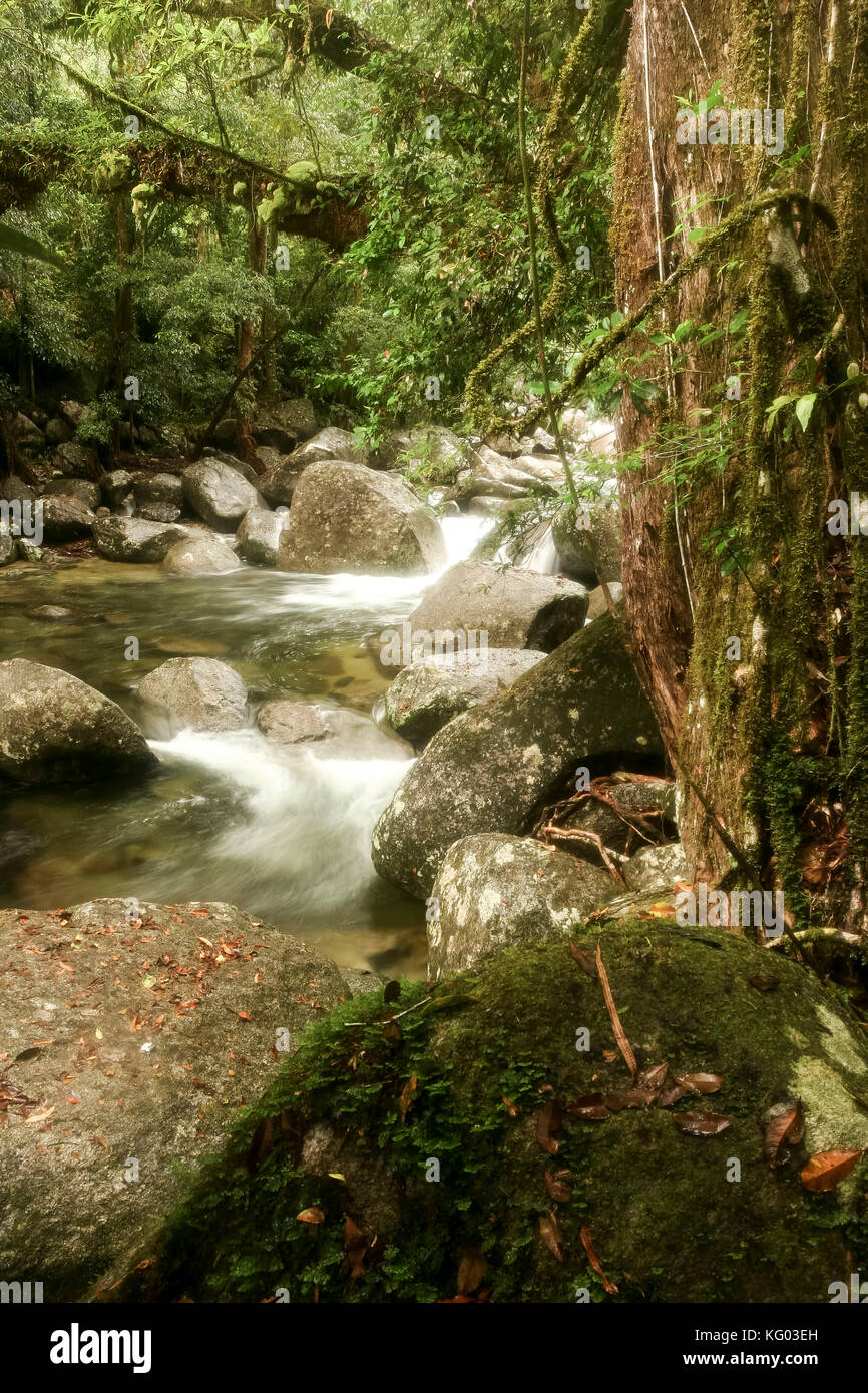 foreground rock and rocky stream flowing through Gorge located in the Daintree National Park rainforest , North - Stock Image