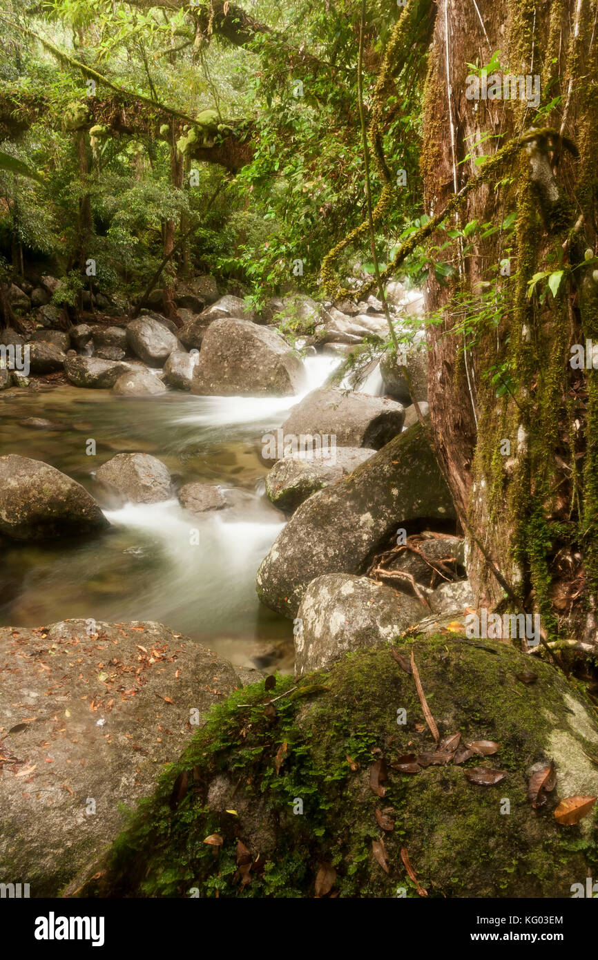 foreground rock and rocky stream flowing through Gorge located in the Daintree National Park rainforest , North Stock Photo
