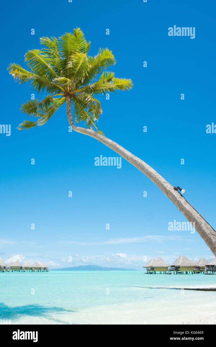 Palm tree with bungalows over water in Bora Bora, French Polynesia - Stock Image